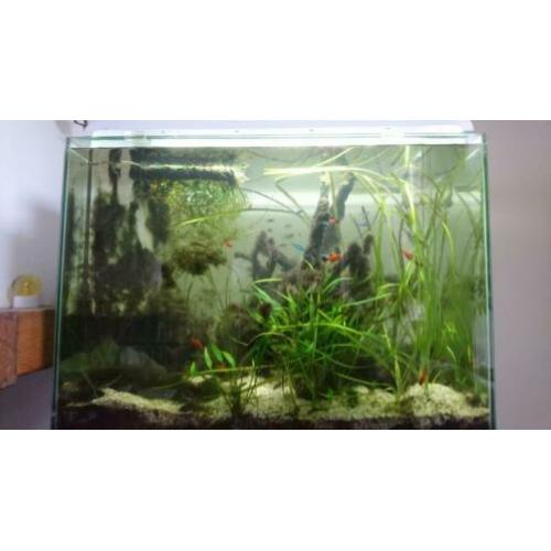 Aquarium Superfish Home 80 evt met vissen